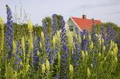 Villa vid blomsteräng