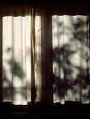 Skuggor i gardiner