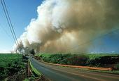 Sugarfield in fire, USA