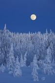 Månen över vinterlandskap