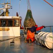 Fiske av havskräftor, Bohuslän