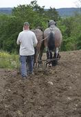 Jordbruk med häst