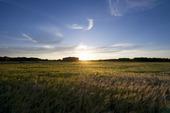 Solnedgång över sädesfält