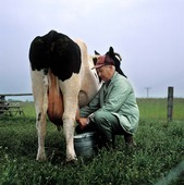 Mjölkning