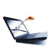 Guldfisk som hoppar ur laptop