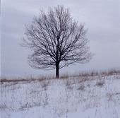 Lind, vinter