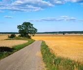 Grusväg i jordbrukslandskap