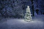 Julgran i snö