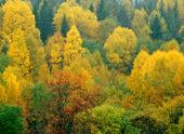 Skog i höstfärger