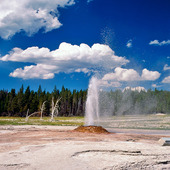 Pink Cone Geyser i Yellowstone National Park, USA