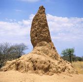 Termitstack, Namibia