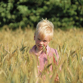 Pojke i sädesfält