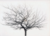 Träd utan löv