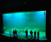 Människor vid akvarium
