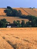 Jordbrukslandskap, Danmark