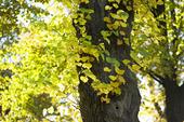Träd med höstlöv