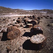 Petrified forest in Arizona, USA