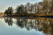 Speglingar av träd i sjö
