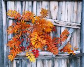 Höstlöv vid gammal trädörr