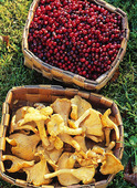 Lingonberry and chanterelles