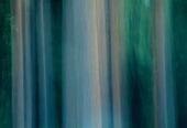 Abstrakta trädstammar