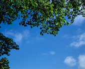 Träd mot blå himmel