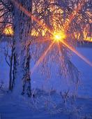 Solnedgång  i vinternatur