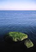 Algbeväxta stenar vid hav