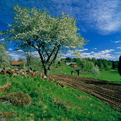 Landskap vid Åsens by, Småland