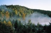 Höstmorgon i naturen