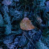 Frost på marken