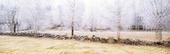Frostiga träd (dubbelexponerad)