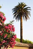 L´ile Rousso, Korsika