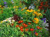 Blommor i park