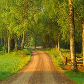 Grusväg genom skog