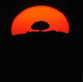 Träd i solnedgång