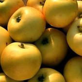 Gula äpplen