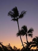 Solnedgång på Hawaii, USA