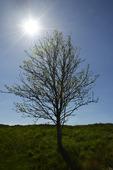 Träd i solsken