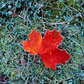 Rött höstlöv