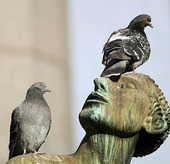 Pigeons on the Orpheus Group, Stockholm