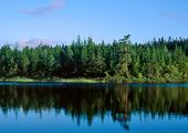 Skog vid insjö