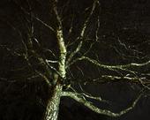 Spökträdet