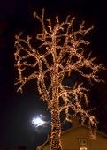 Ljusslingor i träd