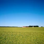 Sädesfält på Skaraslätten, Västergötland
