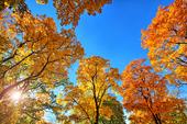 Höstträd i solsken