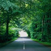 Landsväg genom skogstunnel