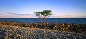 Träd vid havet