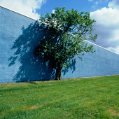 Träd vid blå mur