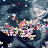 Blomblad i vatten